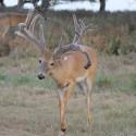 Texas Wildcat #1
